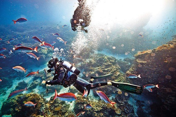 Scuba Diving in the Great Barrier Reef